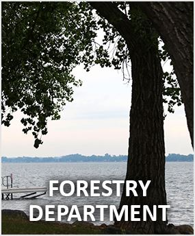 Watertown Forestry Department