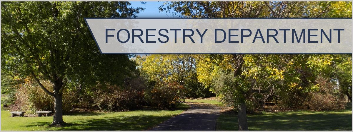 FORESTRY DEPARTMENT-100